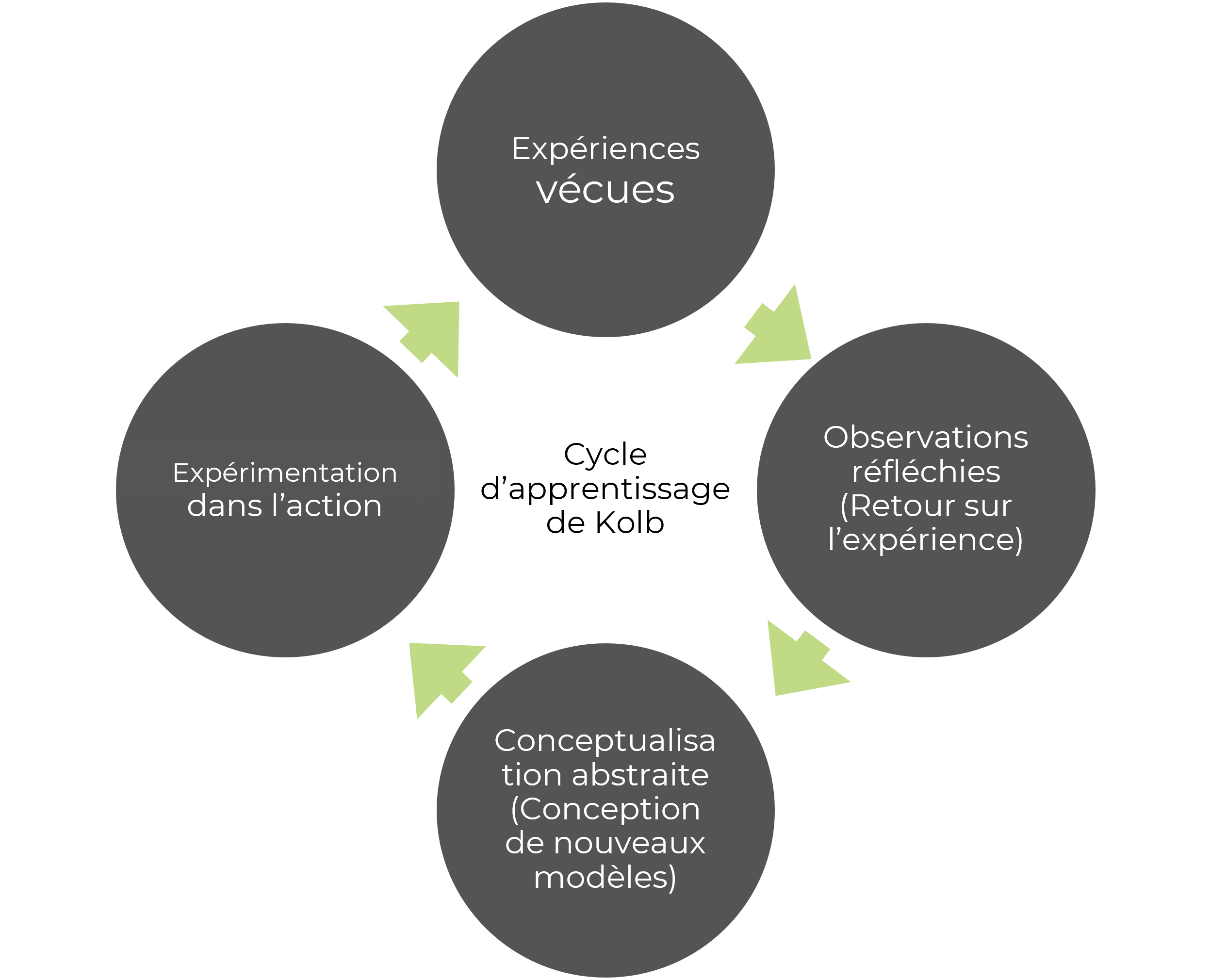 kolb cycle